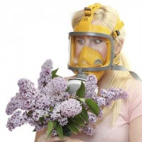 Какие цветы можно дарить аллергикам?